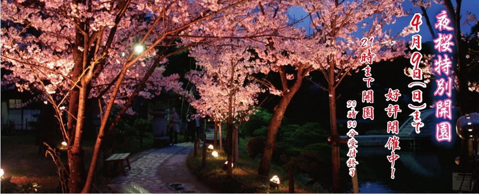 Light up for Cherry blossoms!!!