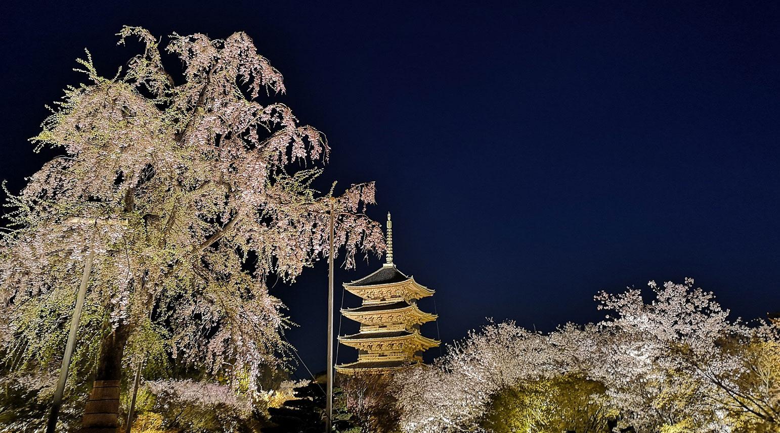 【京都 旅行 観光 情報】現地スタッフが地元京都から配信 ~撮影スポットやグルメ情報も~